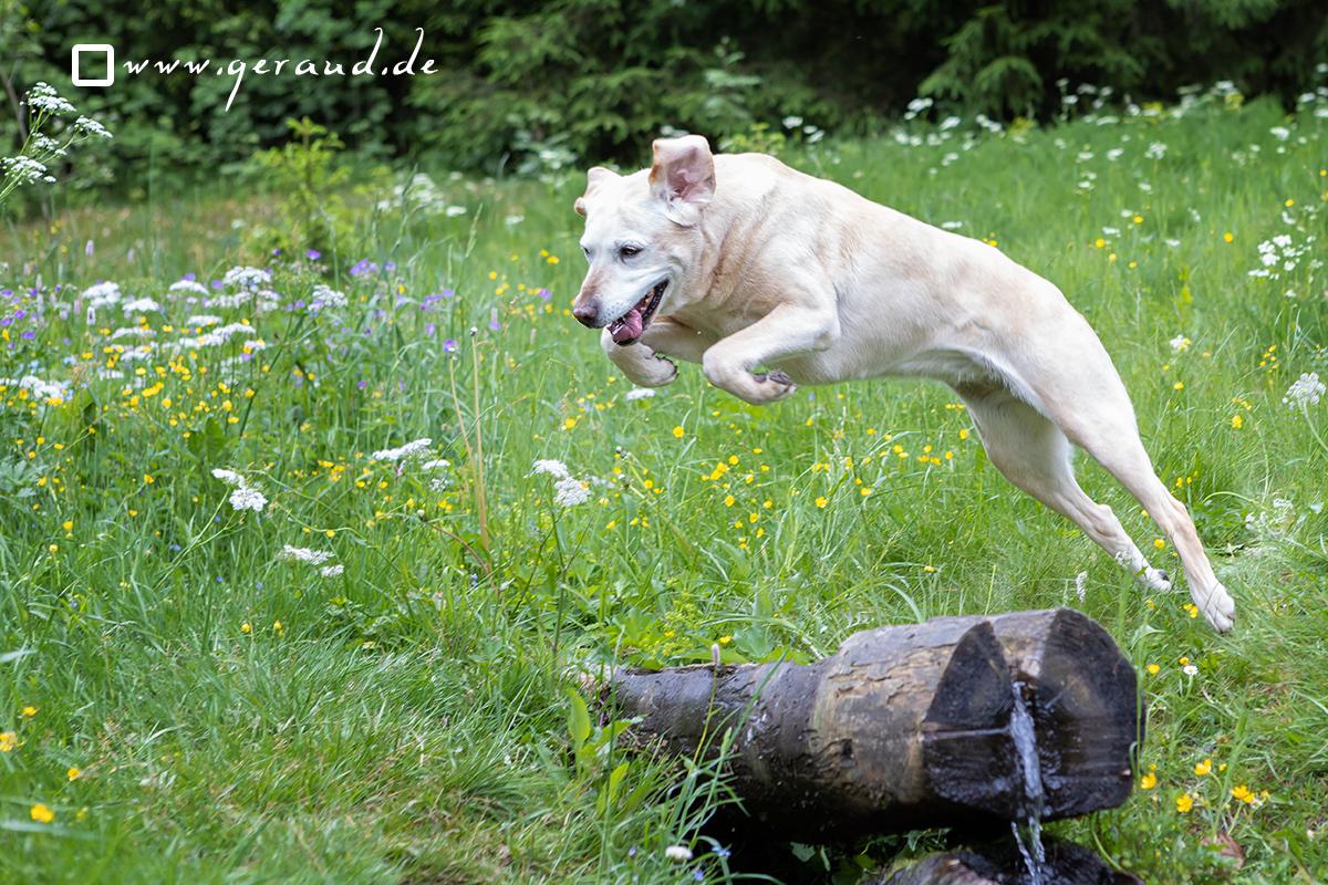 Hundefotoshooting Hundefotograf Suhl Zella-Mehlis Meiningen